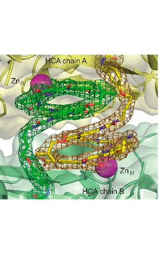 HCAdimerzoom - Foldamers/Biomolecules interactions